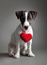 Hartafwijkingen bij honden