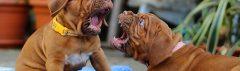 Pups hebben scherpe tandjes