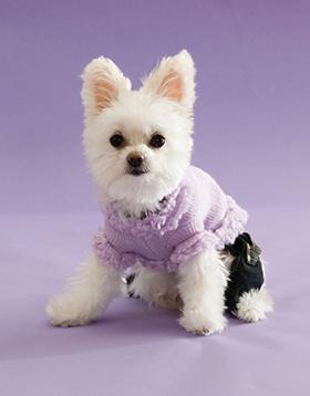 klein-hondje