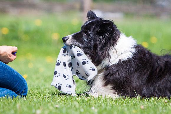 Bejaarde hond