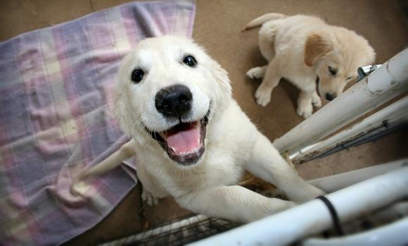 Blije hond bij thuiskomst