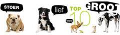 De populairste hondenrassen