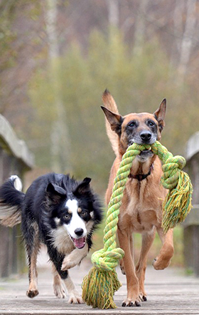 Hebben honden bewustzijn?