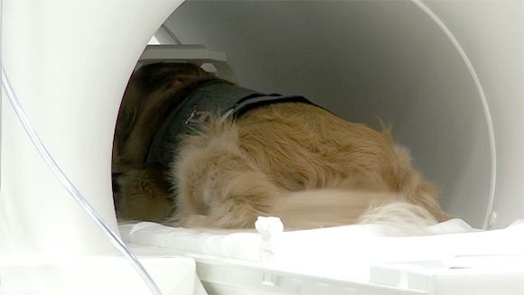 Hond in MRI-scan