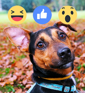Hond op Facebook