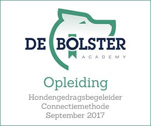 Bolster Academy