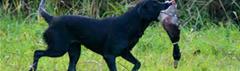 Jachthond