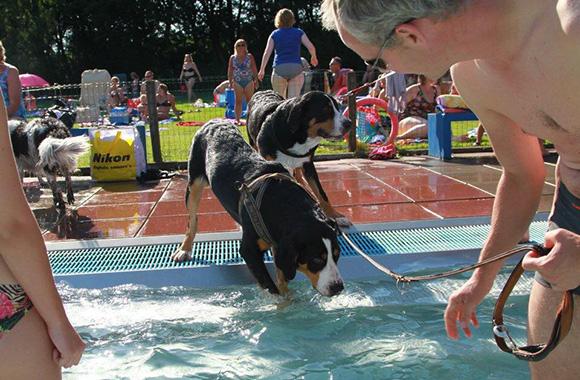 Laat je hond zelf kiezen of hij het water in wil gaan.