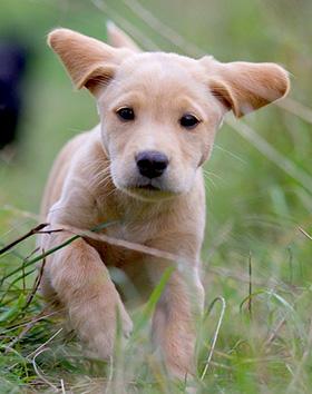 Puppy komt