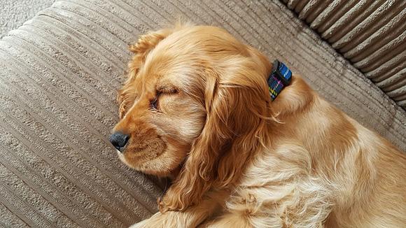 Puppy slaapt
