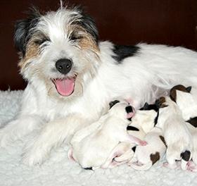 Teefje met haar pups
