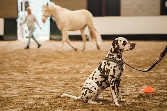 Hond negeert paard