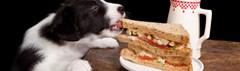 Hond steelt eten