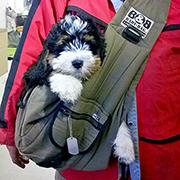 Puppy draagzak