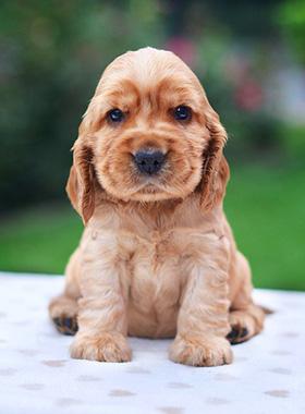 Schattige pup