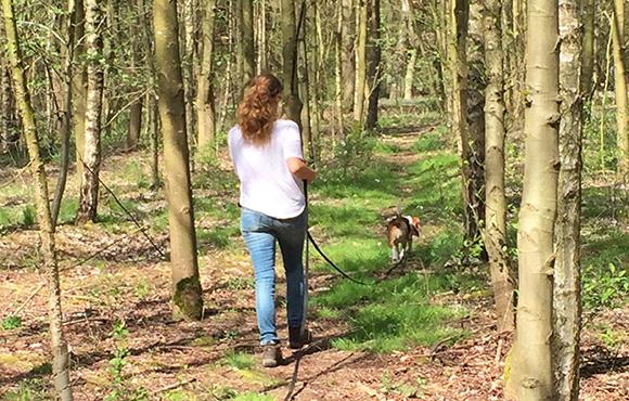 Op het spoor van de vermiste hond