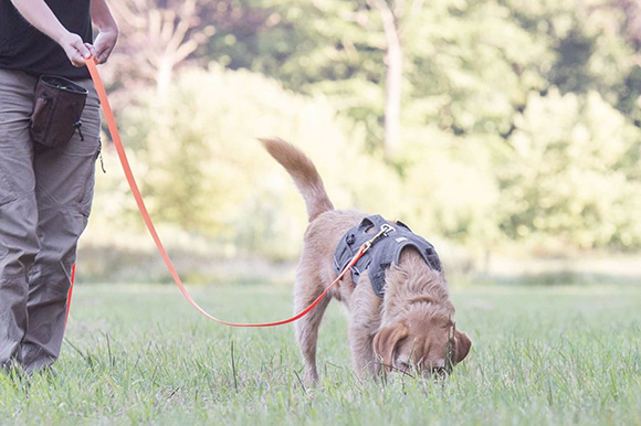 Speuren naar een vermiste hond