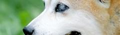 Blinde hond