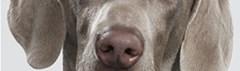 Jaloerse hond