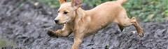 Puppy in de modder