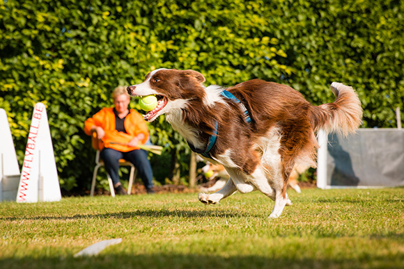 """Flyball"