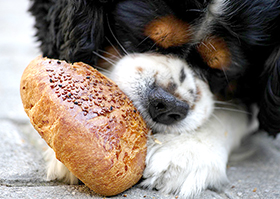 Waar liggen de broodjes?