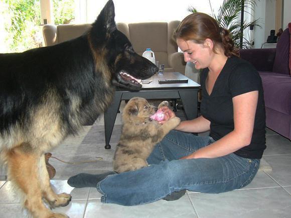 Socialisatie van een puppy