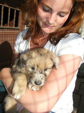 Socialisatie van een pup