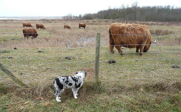 Socialiseren met andere dieren