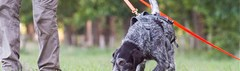 Speurhond zoekt naar een vermiste hond