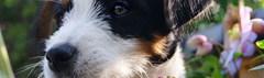 Hoe start ik een hondenkennel?