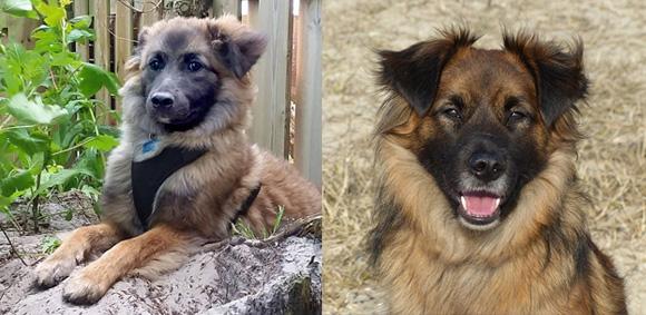 Fox voor en na