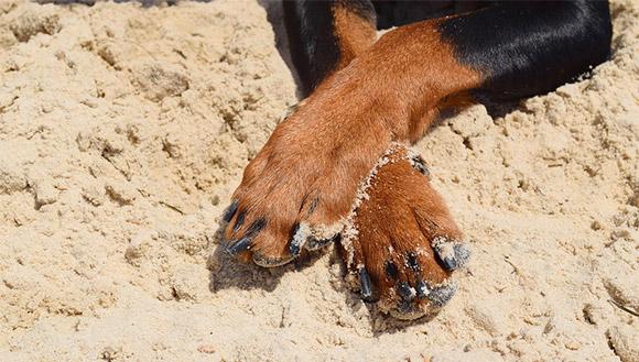 Gekruiste pootjes bij een hond
