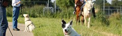 Hond leert paard te negeren