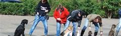 Hondeneigenaren