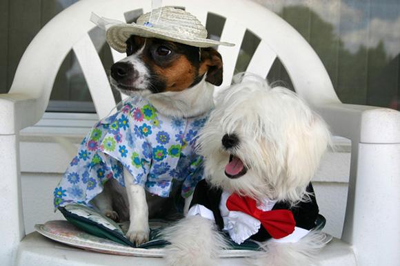 Hondenkleertjes