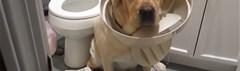Is jouw huis hondproof?