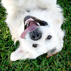 Vertrouwen tussen hond en mens