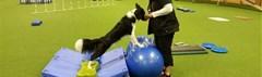 Rehabilitatie training