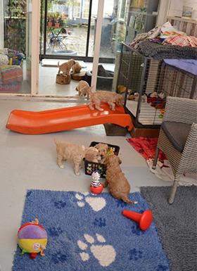 Pupjes op ontdekking
