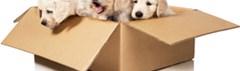 Honden- en kattenbesluit