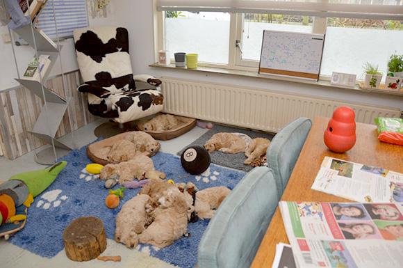 Pups in de woonkamer