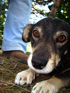 Hond met een trauma
