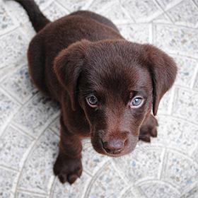 Puppy zit