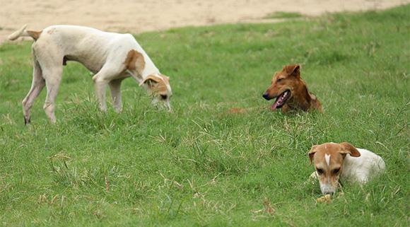 Straathonden geven de voorkeur aan staan of liggen