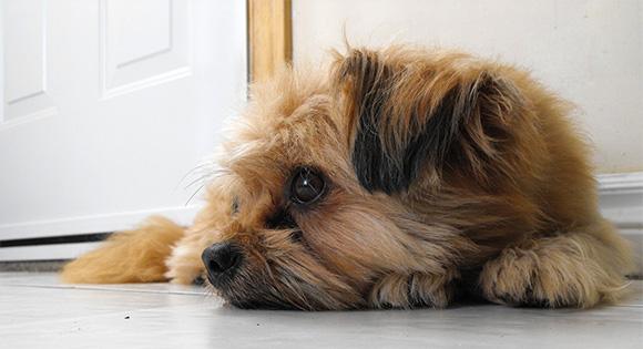 Hond alleen thuis.