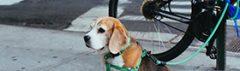 Hond op straat