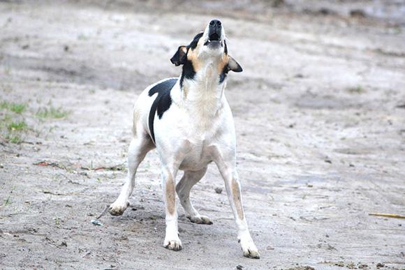 Honden blaffen buitenshuis.