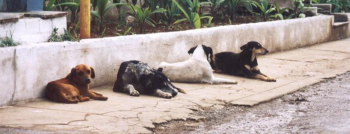 Honden in het buitenland