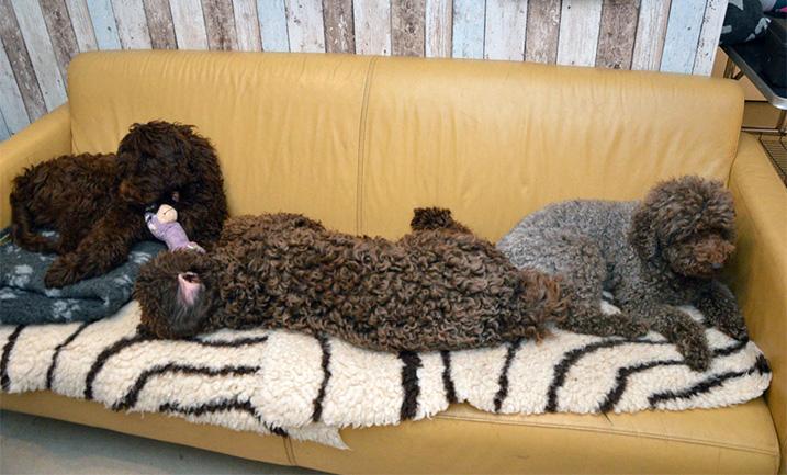 Honden op de bank